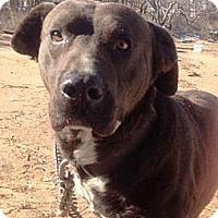 Adopt A Pet :: Charlie - Blanchard, OK