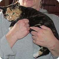 Adopt A Pet :: Leynia - Acme, PA