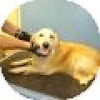 Adopt A Pet :: Elda - Denver, CO