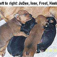 Adopt A Pet :: JuDee: - Minneapolis, MN