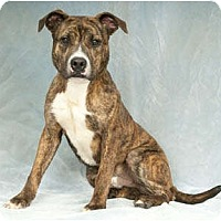 Adopt A Pet :: Highlight - Chicago, IL