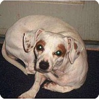Adopt A Pet :: Lexie - Irvington, KY
