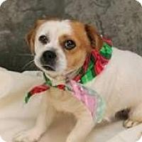 Adopt A Pet :: Casper - Hastings, NY