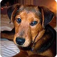 Adopt A Pet :: Braden-ADOPTED! - kennebunkport, ME