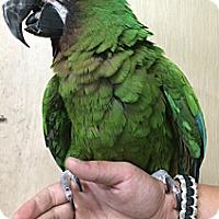 Adopt A Pet :: Greenie - Woodbridge, NJ