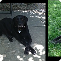 Adopt A Pet :: Sophie - Loveland, CO