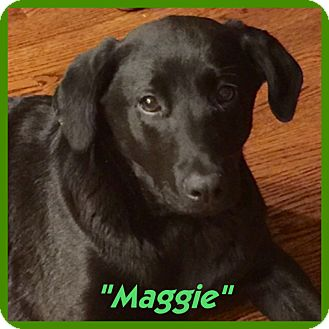 Labrador Retriever Mix Puppy for adoption in Eden Prairie, Minnesota - MAGGIE