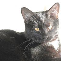 Adopt A Pet :: Sid and Seth - Rawlins, WY