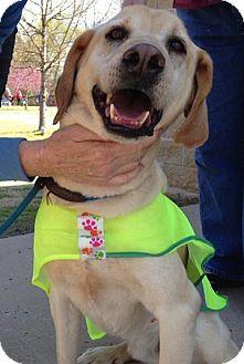 Labrador Retriever/Hound (Unknown Type) Mix Dog for adoption in Tahlequah, Oklahoma - Shadow