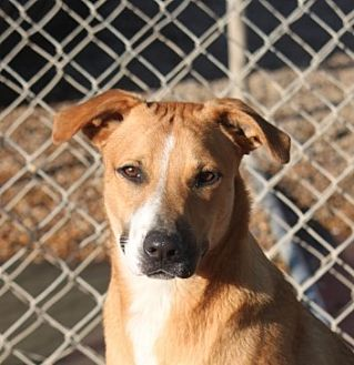 Terrier (Unknown Type, Medium) Mix Dog for adoption in Mahwah, New Jersey - Tootles