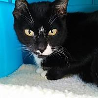 Adopt A Pet :: Babette - Bradenton, FL