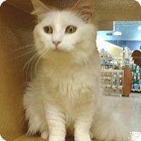 Adopt A Pet :: Liza - Colmar, PA