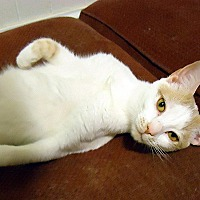 Adopt A Pet :: Tavi - Durham, NC
