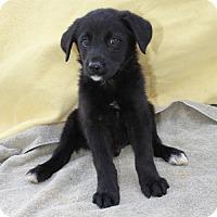 Adopt A Pet :: Pluto - St. Bonifacius, MN