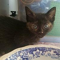 Adopt A Pet :: Minerva - Hanna City, IL