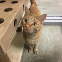 Adopt A Pet :: Frankie - Fort Dodge, IA