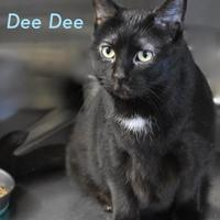 Adopt A Pet :: Dee Dee - Port Hope, ON