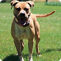 Adopt A Pet :: Pepper - Port Jervis, NY