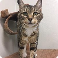 Adopt A Pet :: Hercules - Webster, MA