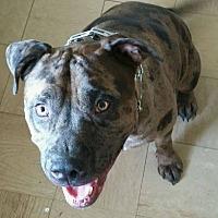 Adopt A Pet :: Banji - Wymore, NE