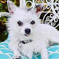 Adopt A Pet :: Wesley - Irvine, CA