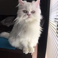 Adopt A Pet :: TWINKIE - Chatsworth, CA