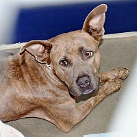 Adopt A Pet :: Chloe - San Jacinto, CA