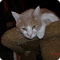 Adopt A Pet :: Chance - San Luis Obispo, CA