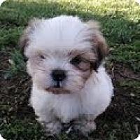 Adopt A Pet :: ADAIN - Mission Viejo, CA