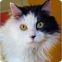 Adopt A Pet :: Hurley - Marietta, GA