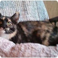 Adopt A Pet :: Marissa - Anchorage, AK
