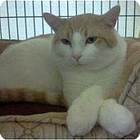 Adopt A Pet :: Sammy - Harriman, NY