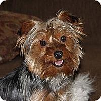 Adopt A Pet :: Serenity - Skokie, IL