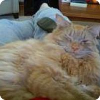 Adopt A Pet :: Julius - Bedford, MA