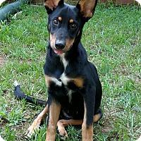 Adopt A Pet :: Aladdin - Knoxville, TN