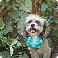 Adopt A Pet :: **BOOTSIE** - Stockton, CA