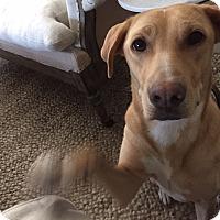 Adopt A Pet :: Bailey (Daisy) - Cumming, GA