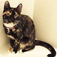 Adopt A Pet :: Caroline - Garner, NC