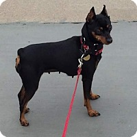 Adopt A Pet :: Newbie - Oceanside, CA