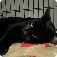 Adopt A Pet :: Bobby - Norwich, NY