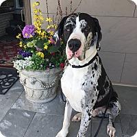 Adopt A Pet :: Diesel - Springfield, IL