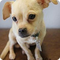 Adopt A Pet :: Banjo - Yukon, OK