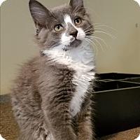 Adopt A Pet :: Twiddles - Lenhartsville, PA