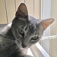 Adopt A Pet :: Silvie - O'Fallon, MO
