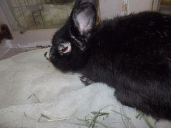 Other/Unknown/Other/Unknown Mix for adoption in Palm Coast, Florida - Clover
