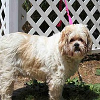Adopt A Pet :: RADAR - Hampton Bays, NY