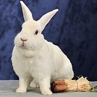 Adopt A Pet :: Nieve - Marietta, GA