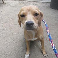 Adopt A Pet :: JEMMA - Porterville, CA