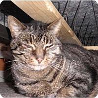 Adopt A Pet :: Garth - Warren, MI