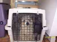 Poodle (Standard)/Terrier (Unknown Type, Small) Mix Dog for adoption in Orem, Utah - Frankie